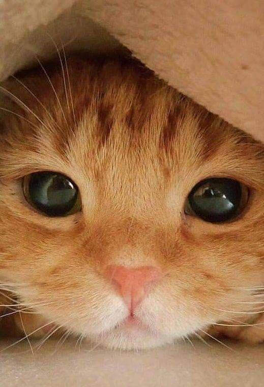 可爱猫咪图片大全2P