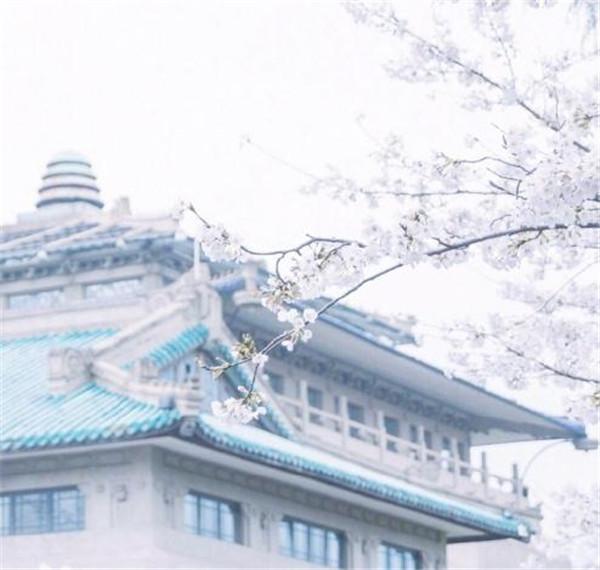 樱花图片大全大图唯美2018 最美樱花图片大全真实风景
