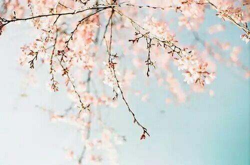 浪漫小清新樱花图片大全