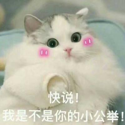 超可爱猫咪微信头像带字高清 劝你别去整容早日投胎比较靠谱