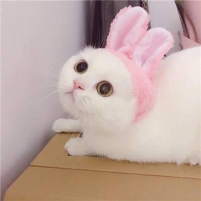 猫咪情侣头像一对可爱呆萌 2019萌宠情侣头像两个一男一女
